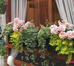 Garden Cottage, Home And Garden, Easy Garden, Flora, Herbs, Diy, Geranium, Amazing, Plants