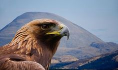 The Glorious Twelfth? Conservationists turn their fire on Scotland's landowners Wildlife groups are urging the Scottish parliament to stop estate managers killing birds of prey to protect the grouse August 7 2016