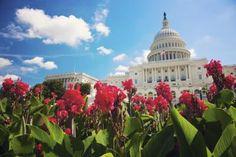 USA, Columbia, Washington DC, Capitol Building - Henryk Sadura/Getty Images
