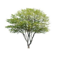Remove Background from Image – remove. Architecture Drawings, Landscape Architecture, Landscape Design, Tree Plan Photoshop, Tree Plan Png, Remove Background From Image, Garden Illustration, Plants Are Friends, Tree Silhouette