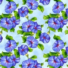 Prairie Gate - Morning Glory Trumpets -Quilt Fabrics from www.eQuilter.com