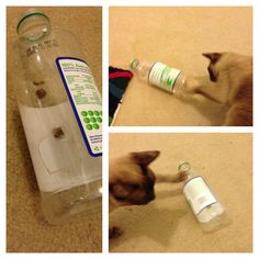 DIY - treats in a bottle. Add a hole large enough for a paw and leave the lid off as well. Just add treats