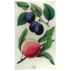 "Plum and Peach  A beautiful composition of plums and a peach on branches, from a 19th century botanical print. Decoupaged on glass with felt backing. 10 x 16"" #johnderian"
