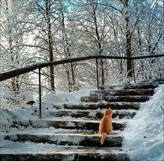 This kitty looks like it is in Narnia  (Lion, Witch and the Wardrobe)