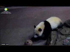 Lovely Pandaa