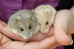Did you know pocket pets also end up in shelters? Peach & Mango are available for adoption at Pet Valu King & Dufferin!