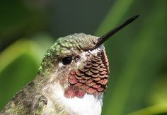Looking to make your own hummingbird food? Then this hummingbird nectar recipe will help you do just that! Save money and keep your hummingbirds coming back again and again. Hummingbird Nectar, Hummingbird Food, Finger Tattoos, Tattoo Snake, Baby Food Recipes, Dessert Recipes, Nectar Recipe, Humming Bird Feeders, Humming Birds