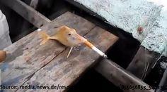 Dieser Fisch raucht eine Zigarette - BuzzerStar  Interessante Neuigkeiten aus der Welt auf BuzzerStar.com : BuzzerStar News - http://www.buzzerstar.com/dieser-fisch-raucht-eine-zigarette-495d46cab.html