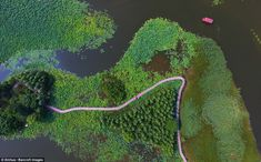 Stunning: Aerial images show how lotus leaves have taken over the Tai'erzhuang National Wetland Park in China's Shandong province