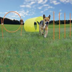 This could be a perfect start for providing Agility training to your pet dog! Get Outward Hound dog agility starter kit with discount of from TSC Pets. Agility Training For Dogs, Training Your Puppy, Dog Agility, Dog Training Tips, Training Kit, Training Schedule, Pet Dogs, Dogs And Puppies, Dog Cat