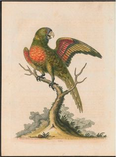 Part I - Gleanings of natural history, exhibiting figures of quadrupeds, birds, insects, plants &c... - Biodiversity Heritage Library