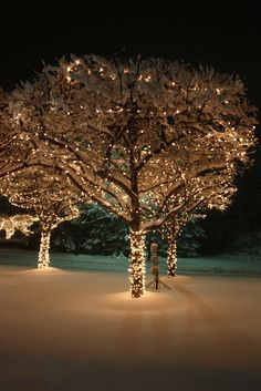 I've always wanted fairy lights wrapped around trees since I was a girl - it's a little touch of magic.
