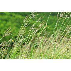 #grass #green #lovestagram #webstargram #instacanv #instacanvas #instamood #thaistagram - @nok77- #webstagram