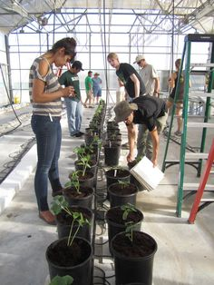 Students installing the next crop of hydroponic vegetables in the Hydroponic Vegetable Production lab