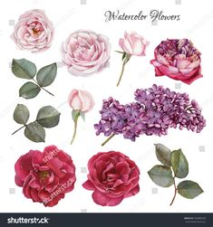 Flowers set of hand drawn watercolor roses and lilac