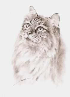 Hilary the Siberian cat original pet portrait by MagaFabler