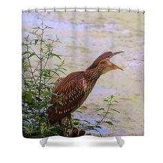 Immature Shower Curtain featuring the photograph Sleepy Night Heron by Karen Silvestri