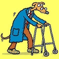 Saiba mais como cuidar de Cães idosos - Fisioanimal - http://www.fisioanimal.com/caes-idosos/