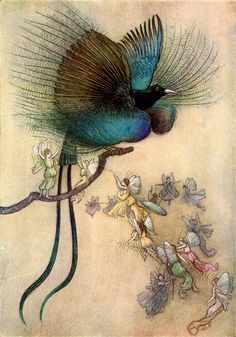 """""""The most beautiful bird of paradise"""" - Water Babies, A Fairy Tale for a Land Baby by Charles Kingsley, 1909 - illustration by Warwick Goble Art And Illustration, Vintage Illustrations, Leprechaun, Fairy Land, Fairy Tales, Warwick Goble, Pop Art, Indian Theme, Most Beautiful Birds"""