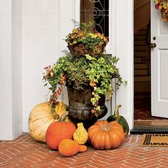 Elevated Autumn Urn | Bring a seasonal splash of color to your entryway by mixing and matching eye-popping blooms with rustic grasses and foliage in your fall container gardens.