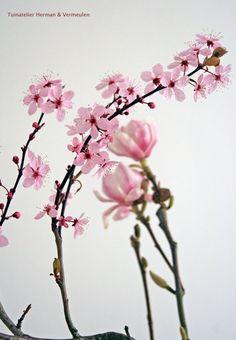 Prunus of kersenboesem in een vaas. #voorjaar #sakura #japan
