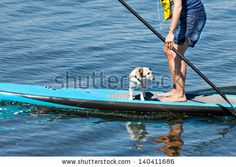 Just sold at Shutterstock: Woman practicing paddle surf with her dog on the surfboard. by eZeePics Studio, via ShutterStock