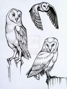Barn Owl studies by sweav on deviantART