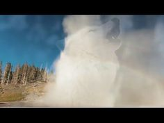 Distractify | They Brought Wolves To Yellowstone, But They Had No Idea This Would Be The Result