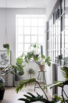 Greenify - Køb den smukke Philodendron Xanadu her. Philodendron er nem at passe og ser smuk ud. Greenify bringer planterne helt til dørs.