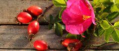 ¿Conoces el poder regenerador del aceite de rosa mosqueta? Hoy en el blog de PromoFarma  os contamos cómo utilizarlo para minimizar las cicatrices del acné en la piel:  http://pp.promocionesfarma.com/dynclick/promocionesfarma/?ept-publisher=pinterest&ept-name=PArosamosqueta&eurl=http://blog.promocionesfarma.com/mamas-y-ninos/rosa-mosqueta-para-el-cuidado-del-acne  #belleza #cuidadopiel #acne #cicatrices