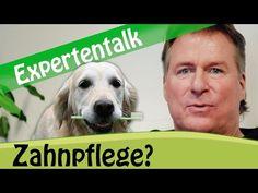 Mein Hund bellt - was kann ich dagegen tun? - YouTube Beagle, Labrador Retriever, Dog Cat, Cute Animals, Friends, Cats, Youtube, Dog Nails, Dental Health