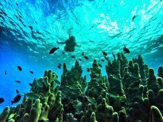 corais de san andres Casablanca, Trailer Park Boys Quotes, Gopro, Aquarium, Vacation, Painting, Travel, Pretty, Road Trip Organization