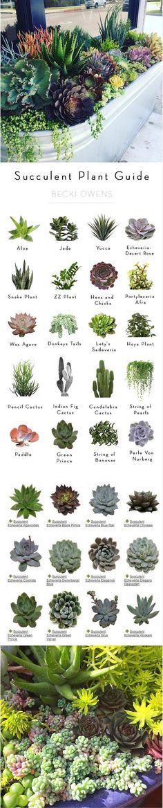 Succulent Plant Guide