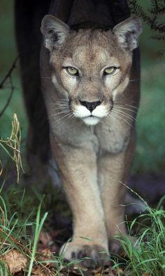 70 Melhores Imagens De Animais Selvagens E Curiosidades