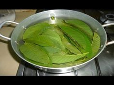 Guava Leaves Can Extremely 100% Stop Your Hair Loss And Make It Grow Like Crazy - Easy Way - YouTube