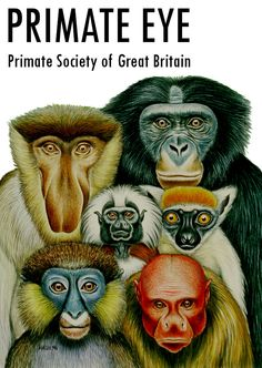 Check out Primate Society of Great Britain's digital archive of Primate Eye at www.psgb.org/archive_primate_eye!  Illustration: © Stephen D. Nash