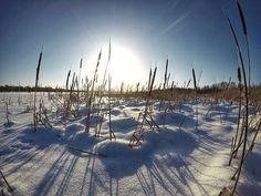 Nukkumaan.  #europe #instafinland #järvenpää #travel #traveler #traveling #travelgram #finnishboy #landscape #landscape_lovers #finnish #travelphotography #instatravel #instapic #instagramers #visitfinland #thisisfinland #discoverfinland #nature #hiking #igersofficial #tuusula  #finnishmoments #lovelyfinland #thebestoffinland #nature #instarunners #trailrunning #beautyofsuomi #fitness