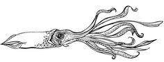 MaggieSichter-SquidIllustration-2011.jpg