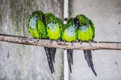 Aussi sublimes que solidaires, ces adorables oiseaux se blottissent les uns…