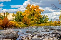 Fall Foliage Print, River Photography, River Print, Mountain Life, River Art, Wyoming Scenery, Wind River, Mountain River, Fall Color