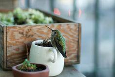 hummingbird. a song in green.