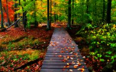 Autumn scenery, wooden bridge and stairs in the forest HD Wallpaper