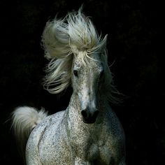 Not really into horses, but gotta admit, it's a stunning shot
