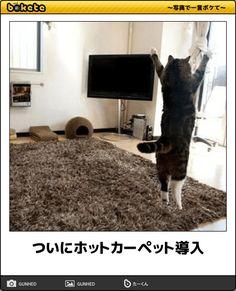 【野生の天才たち】笑いすぎ注意!センスを感じる猫のボケて12選 | CuRAZY [クレイジー]