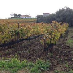 """o Outono """"bem"""" instalado nas vinhas do Vau, a pedir petiscos á volta da grande lareira e muito RISO de Sousa Otto & Friends partilhado"""