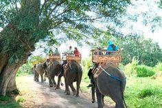 Naik gajah di carangsari bali