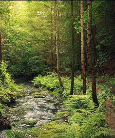 Northumberland Forest, England