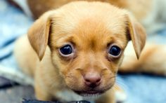 EXTREMELY CUTE PUPPIES GALLERY! #Cute
