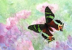 """Aquarelle """"Papillon vert et marron"""" par Savousepate http://www.alittlemarket.com/peintures/fr_aquarelle_papillon_vert_et_marron_non_encadree-7069133.html"""
