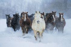 Running in winter by Satoru Kobayashi on 500px